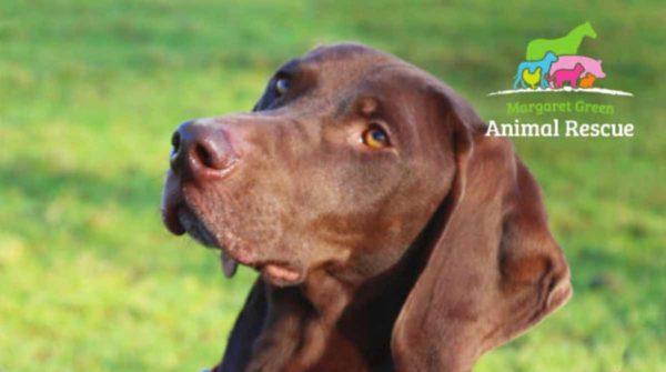Dog Show - Margaret Green Animal Rescue