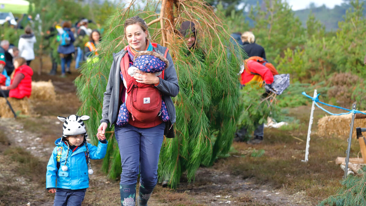 Pull a Pine and Christmas Fair at RSPB Arne